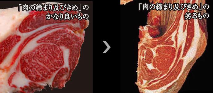 肉の締まり及びきめ